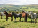 Top 10 Hotel Recommendations for Dartmoor National Park
